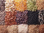 brazil seed industry