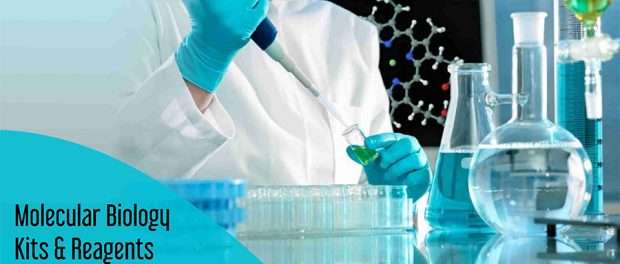 Molecular Biology Kits & Reagents and Enzymes Market