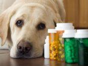 Pet Dietary Supplement Market