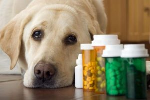 Pet Dietary Supplement Market