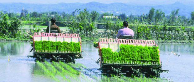Rice Transplanter Market