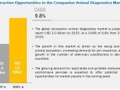 Companion Animal Diagnostics Market