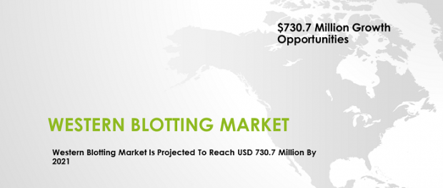 western blotting market