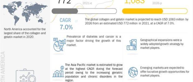 collagen and gelatin market